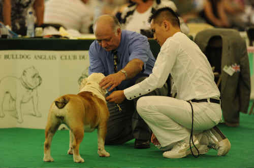 GOING OVER A PUPPY BITCH SCC CH SHOW PARIS 2010.jpg (715925 bytes)