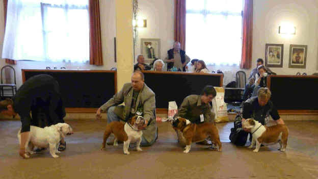 Prague side view challenge, Winners Ch.Bitch, Ch Dog, Best Intermediate,.Best  Veteran.jpg (111246 bytes)