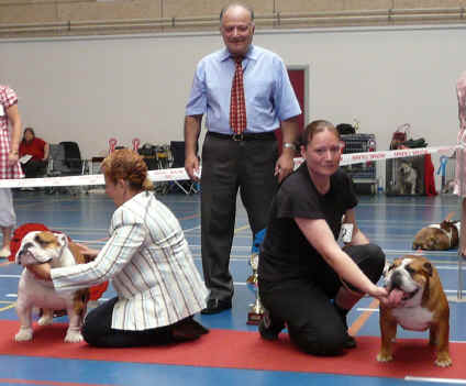 danish club show BEST DOG BOB BEST BITCH BOS 27.7.08.jpg (696529 bytes)